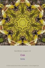 BachBlueten-imagami-22