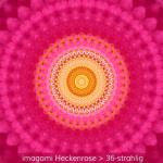 11-Heckenrose-36er